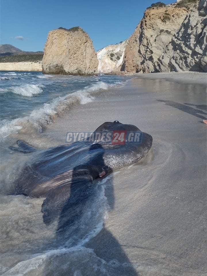 Ψάρι βγαλμένο από… θρίλερ ξεβράστηκε σε παραλία της Μήλου (pic)