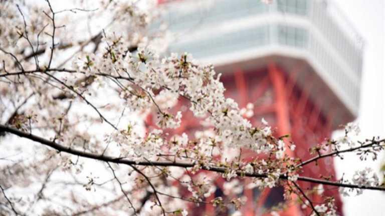 """Ιαπωνία: """"Εξ αποστάσεως"""" εργασία από πανέμορφα εθνικά πάρκα"""