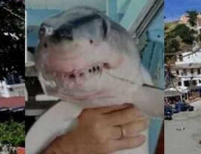 Κρήτη: Αυτός είναι ο τρομακτικός καρχαρίας που πιάστηκε στα δίχτυα ψαρά! Το σχόλιο με τις έξι λέξεις (Φωτό)
