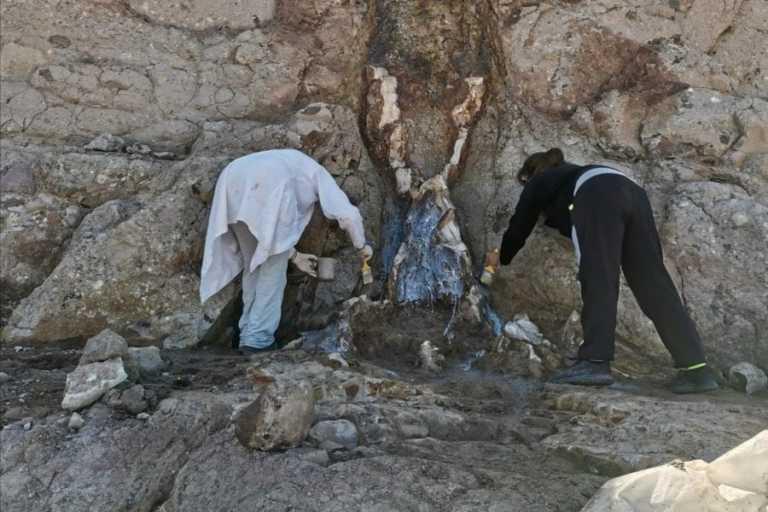 Λέσβος: Ένα υπαίθριο μουσείο με ευρήματα 20 εκατομμυρίων ετών! Νέα μοναδικά ευρήματα (Φωτό)