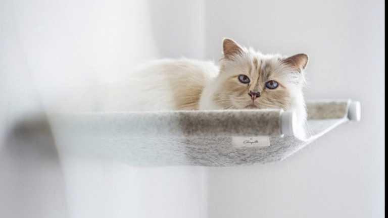 Καρλ Λάγκερφελντ: Η πάμπλουτη γάτα – κληρονόμος λανσάρει έπιπλα για κατοικίδια
