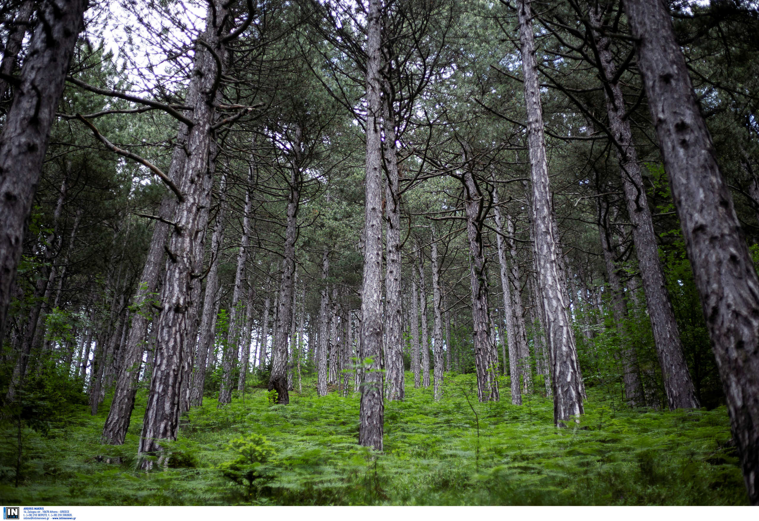 Τρίκαλα: Νεκρός άντρας στο δάσος Ρωποτού! Η αδιανόητη ατυχία που τερμάτισε τη ζωή του
