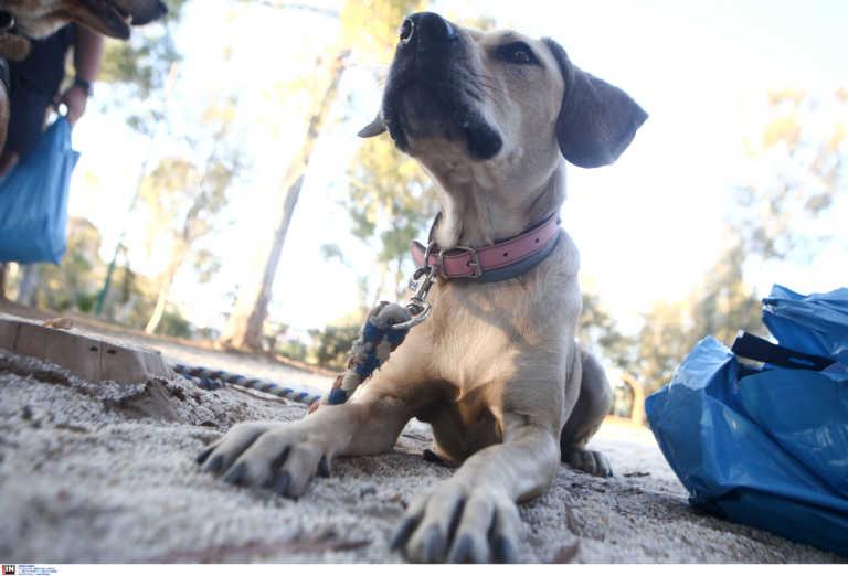 «Κομμένες» οι… τσάμπα μαγκιές! Αυτόφωρο και σύλληψη ζητά ο Άρειος Πάγος για την κακοποίηση ζώων