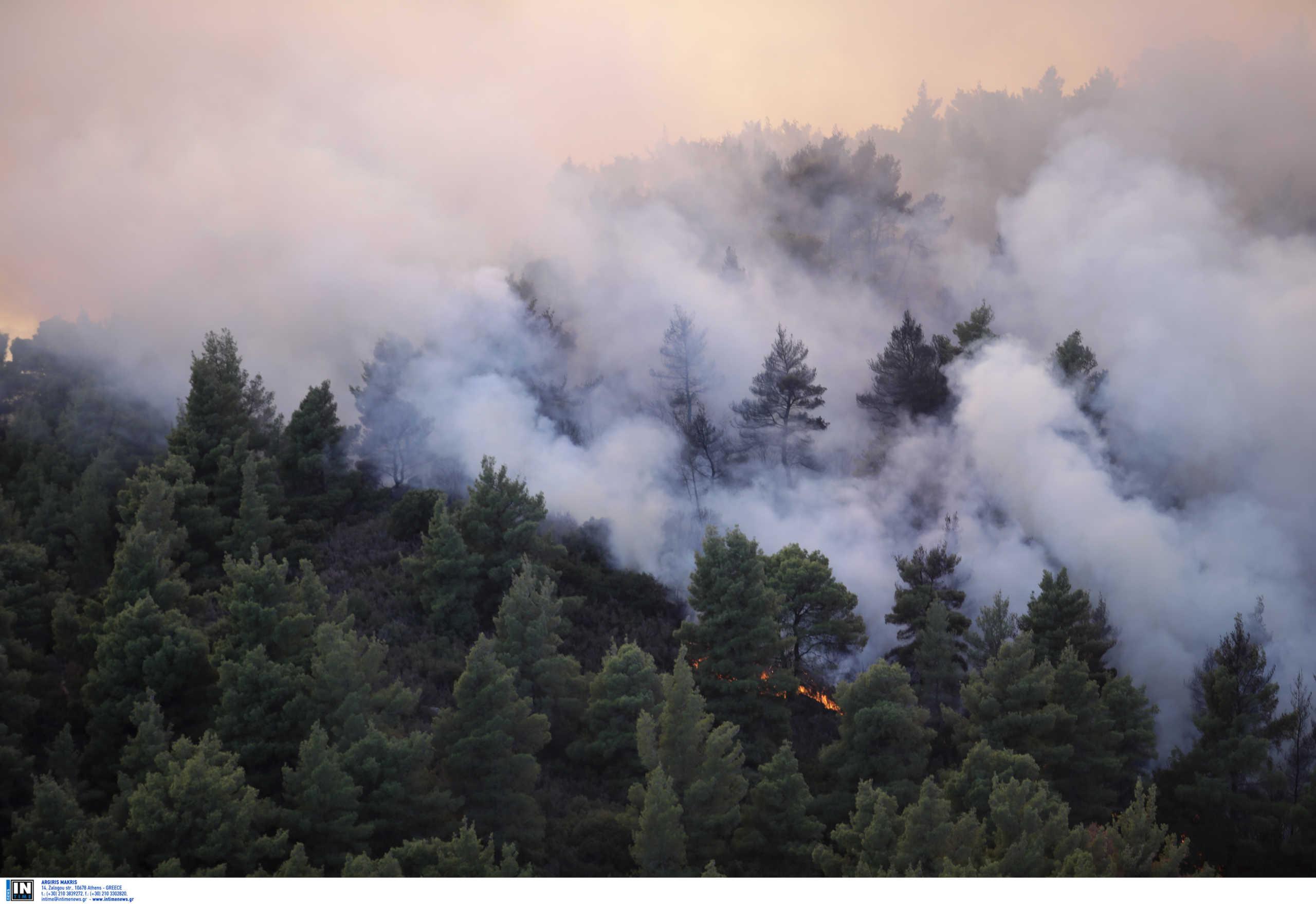 Φωτιά στην Εύβοια: Στις φλόγες δάσος στο χωριό Μίστρος