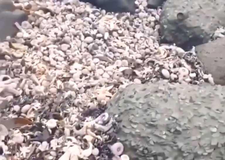 Μυστήριο με τις απόκοσμες εικόνες χιλιάδων νεκρών ζώων στην ρωσική Καμτσάτκα! video