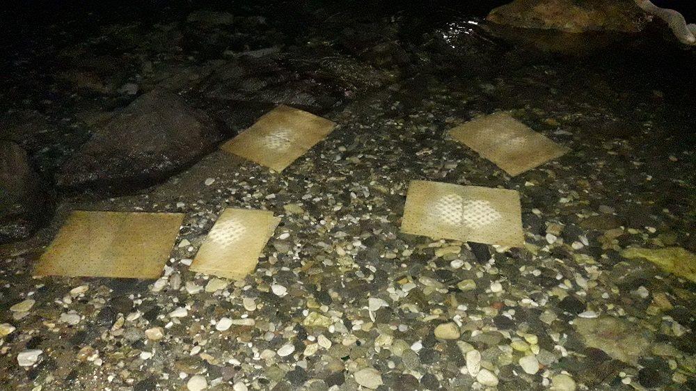 Πάρος: Πετρελαιοκηλίδα και νεκρά ψάρια στον κόλπο της Παροικιάς! Οι εικόνες που προκάλεσαν συναγερμό (Φωτό)