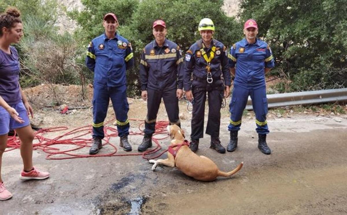 Επιχείρηση της ΕΜΑΚ για σκύλο που έπεσε σε γκρεμό της Φθιώτιδας (pics)