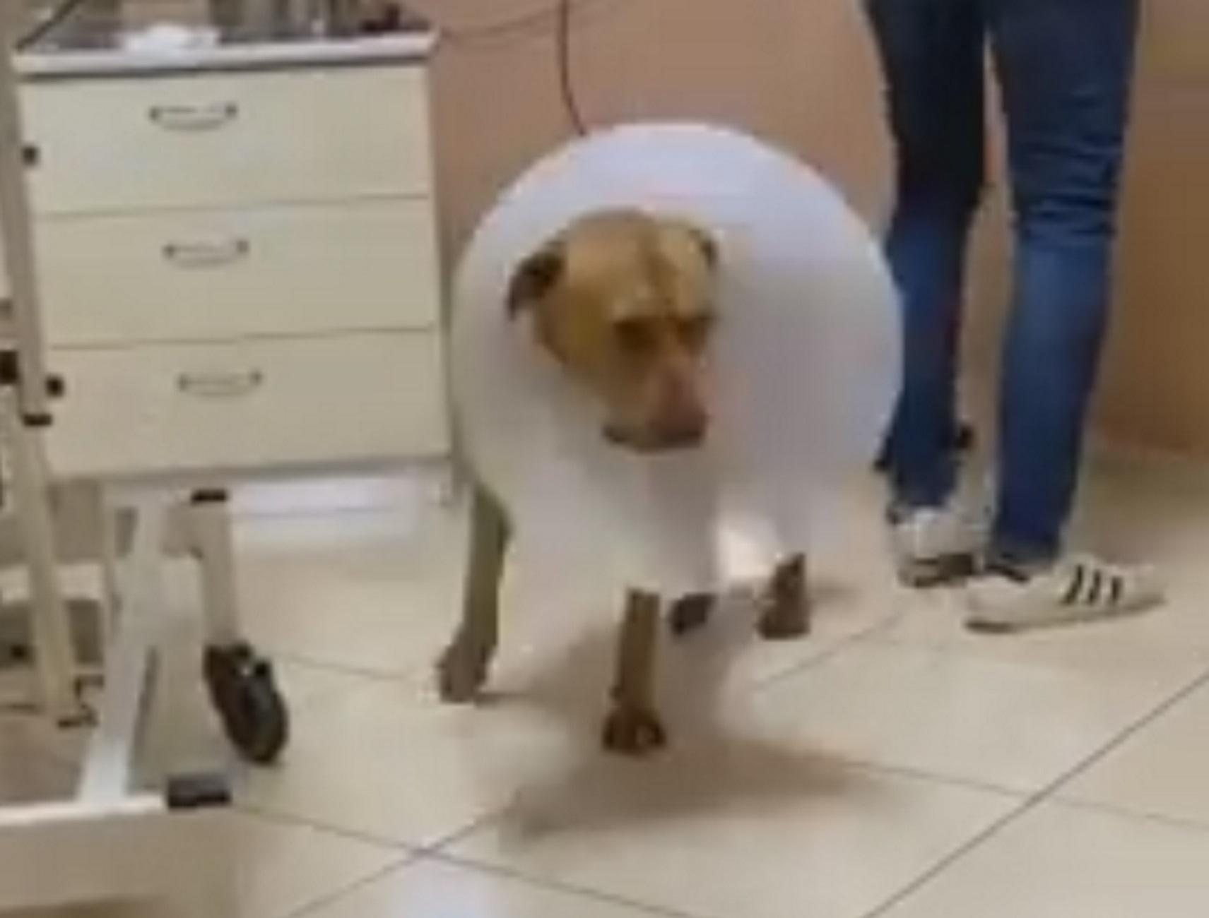 Χανιά: Νέα στοιχεία για την κτηνωδία της χρονιάς! Δείτε πως είναι σήμερα ο σκύλος που υπέφερε τα πάνδεινα (Βίντεο)