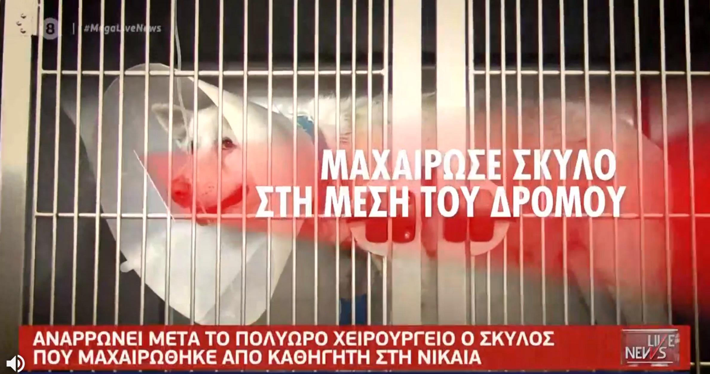 Φρίκη στη Νίκαια: Σε κρίσιμη κατάσταση ο σκύλος – Συνελήφθη ο άνδρας που τον μαχαίρωσε (video)