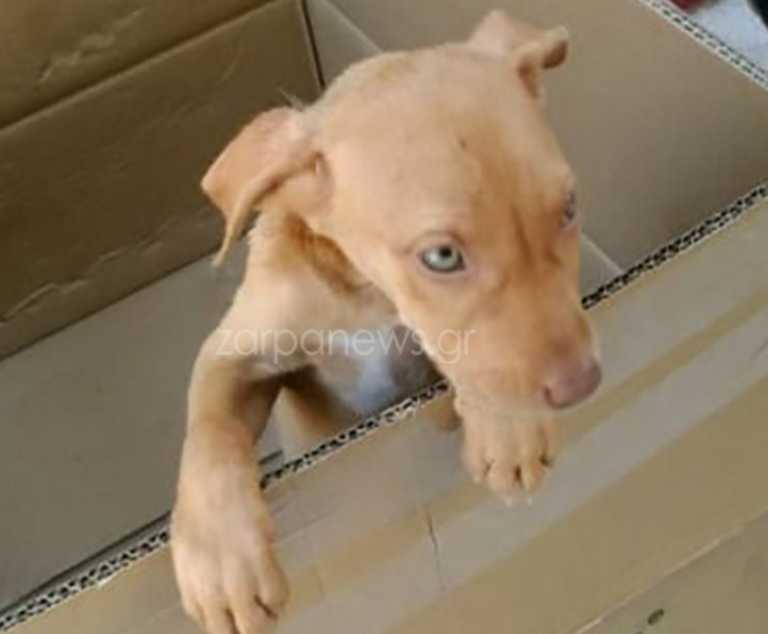 Κρήτη: Τα γυρίζει ο κτηνοτρόφος για την εκτέλεση του σκύλου του! Δίωξη και πρόστιμο 30.000 ευρώ