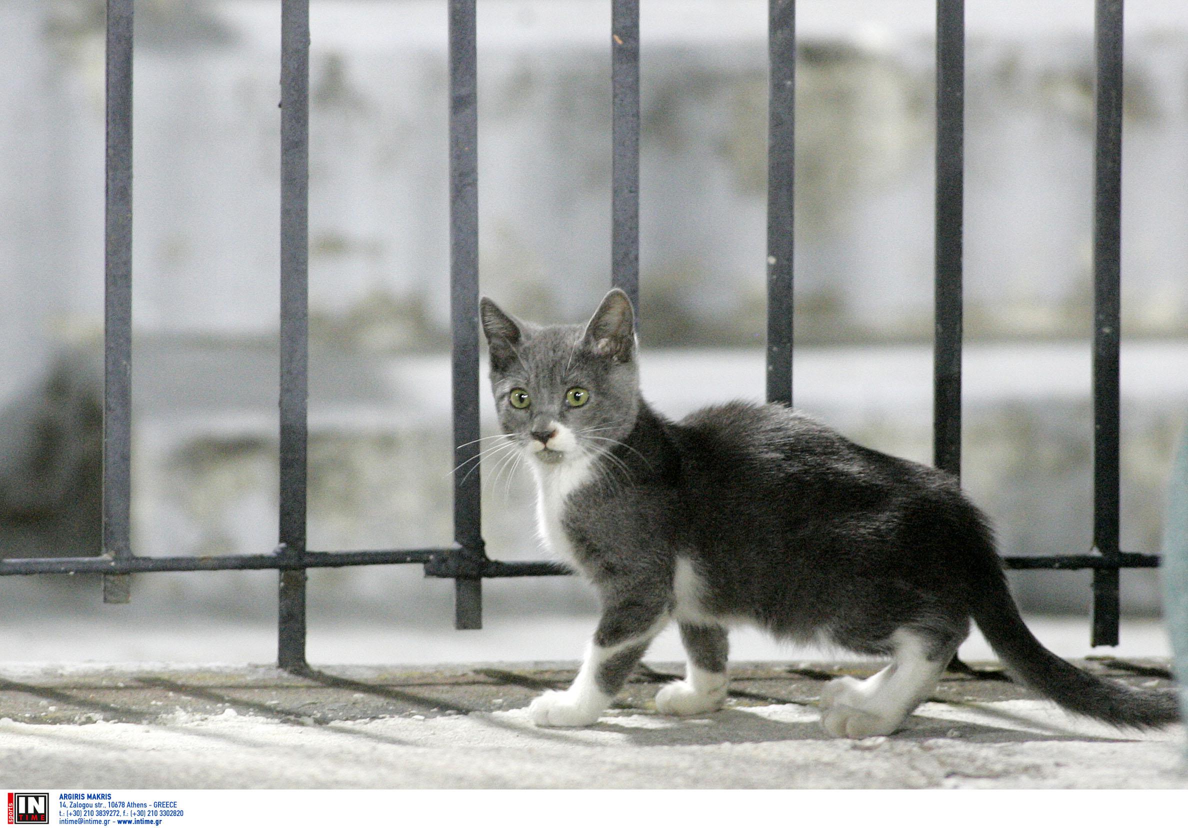 Μία σύλληψη στην Κεφαλονιά για τη θανάτωση γάτας
