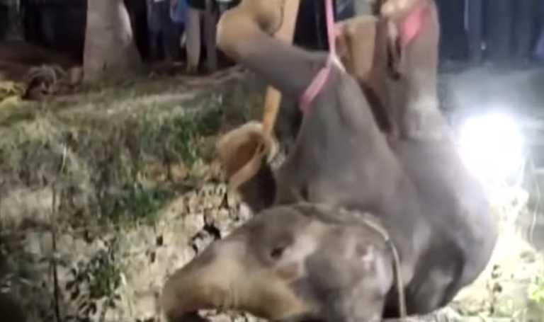 Ινδία: 12ωρη επιχείρηση για τη διάσωση ελέφαντα που έπεσε σε πηγάδι! (video)