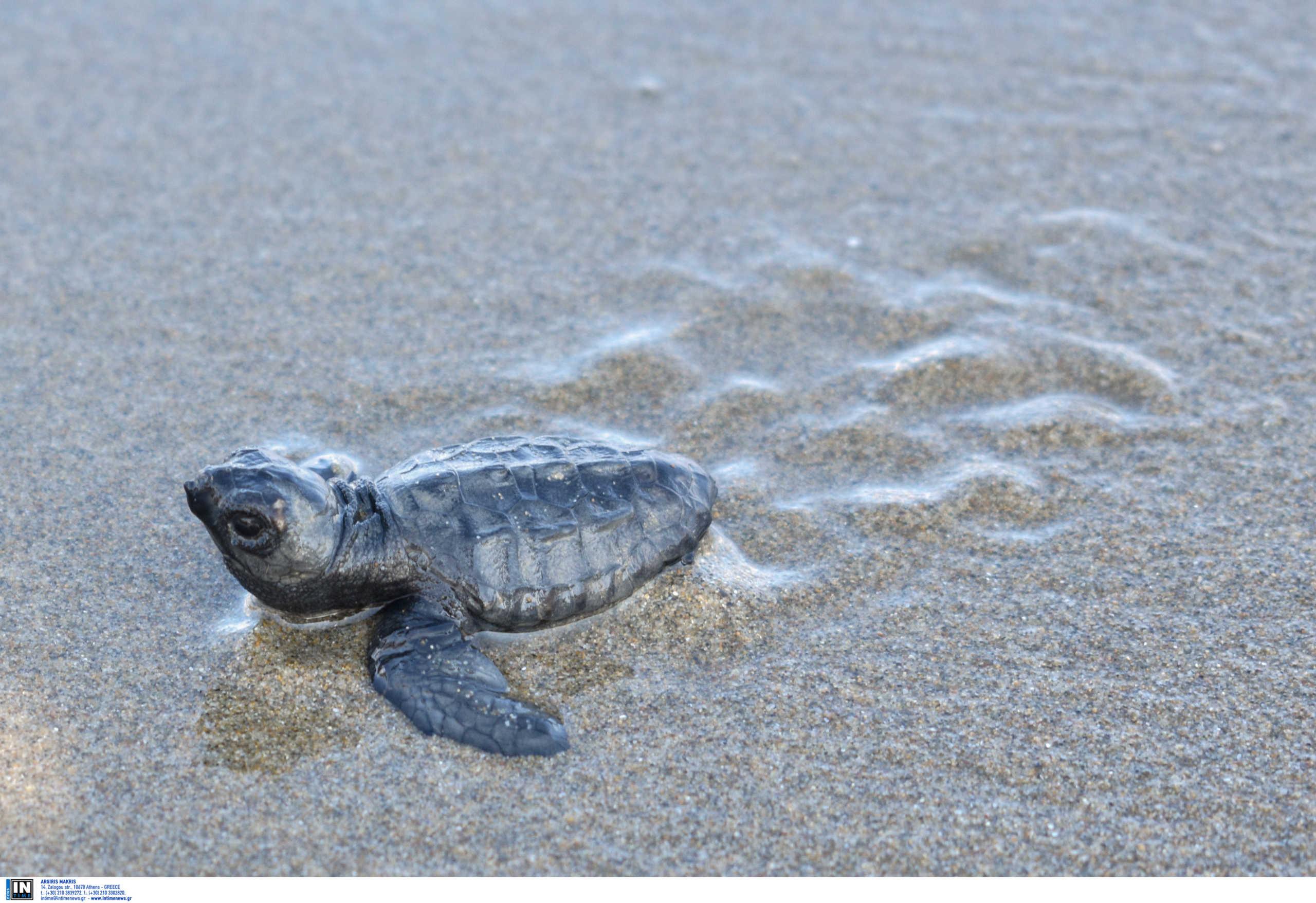 Θεσσαλονίκη νεκρή χελώνα