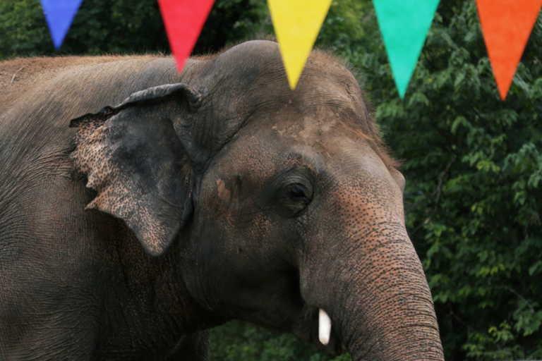 Πακιστάν: Η Σερ στο πλευρό ελέφαντα που διέσωσε από την κακομεταχείριση