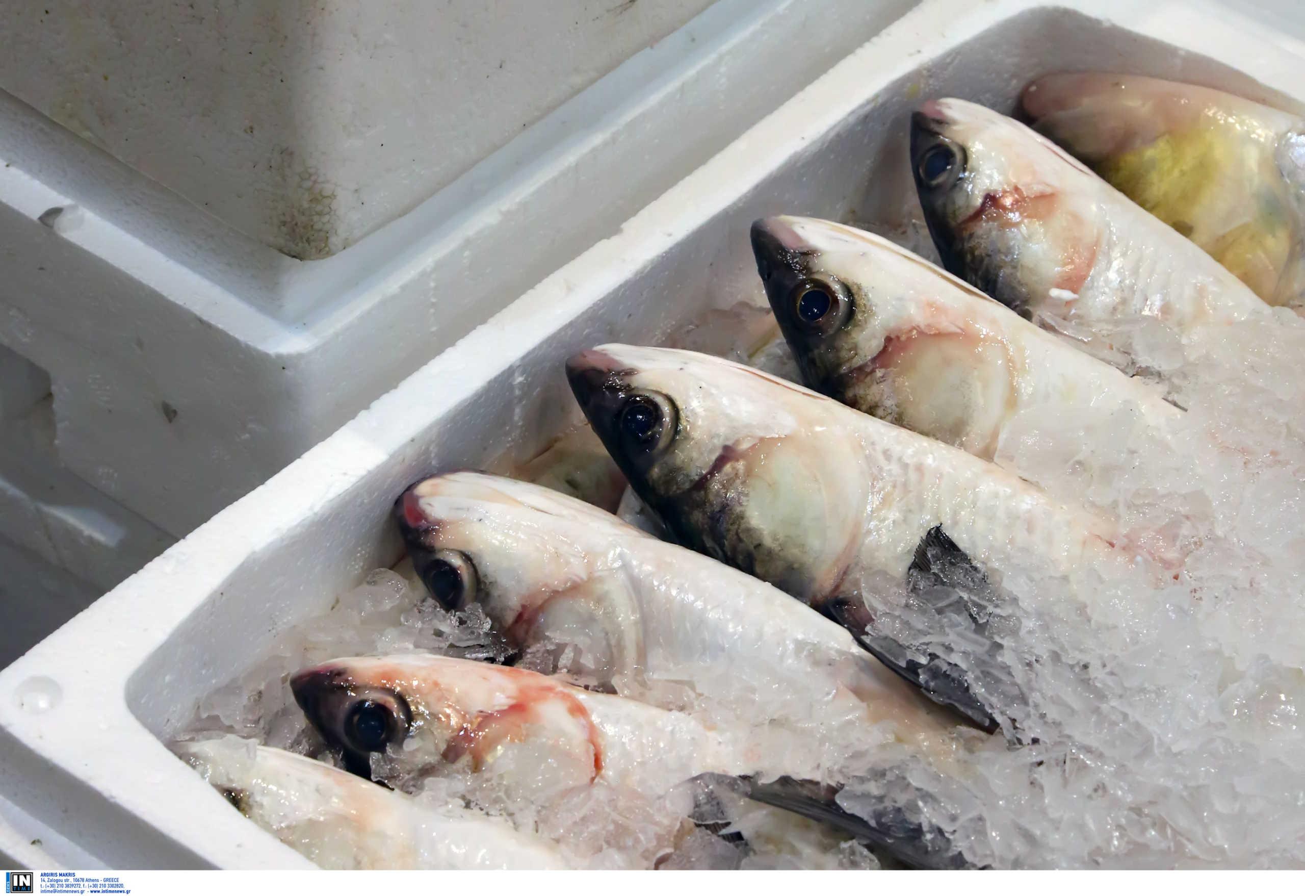 Κορονοϊός ψαράδες