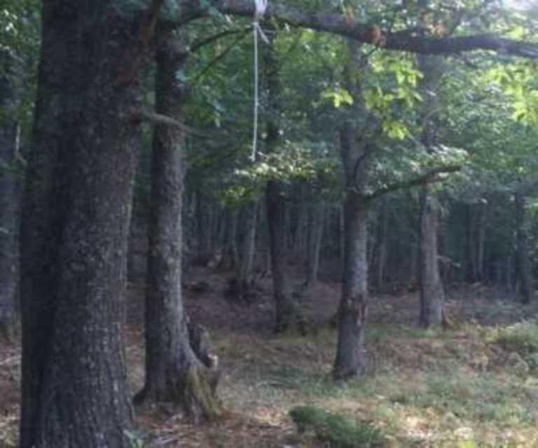 Πρέβεζα: 47χρονος βρέθηκε απαγχονισμένος στο δάσος – Αγνοούνταν για μέρες