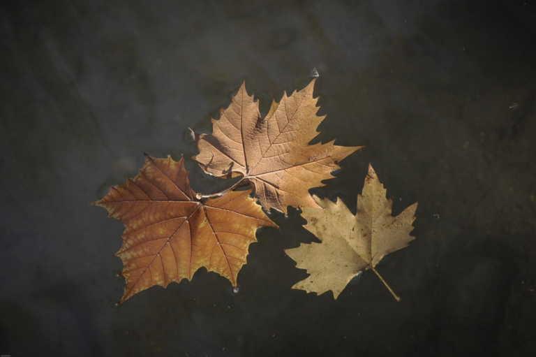 Φθινόπωρο: Γιατί τα φύλλα των δέντρων πέφτουν νωρίτερα