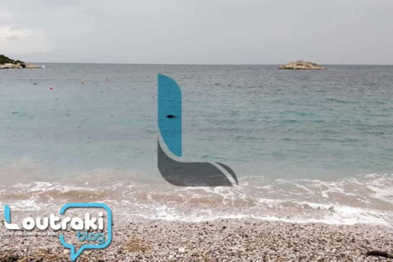 Λουτράκι: Δεν πίστευε στα μάτια του με αυτό που ξέβρασε η θάλασσα! (vid)