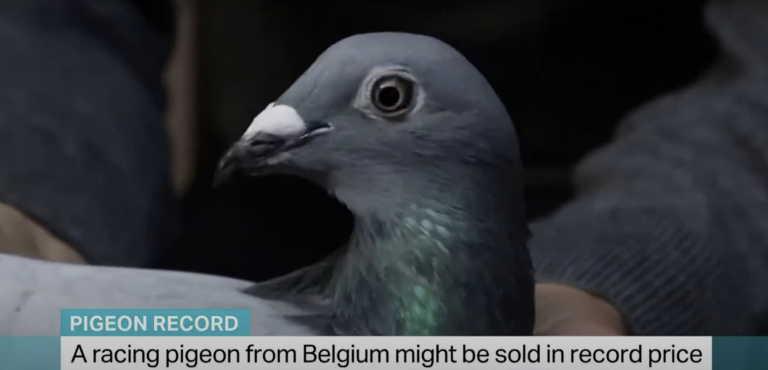 Ο… Μπολτ των περιστεριών έπιασε τιμή ρεκόρ 1,6 εκατ. ευρώ! (video)