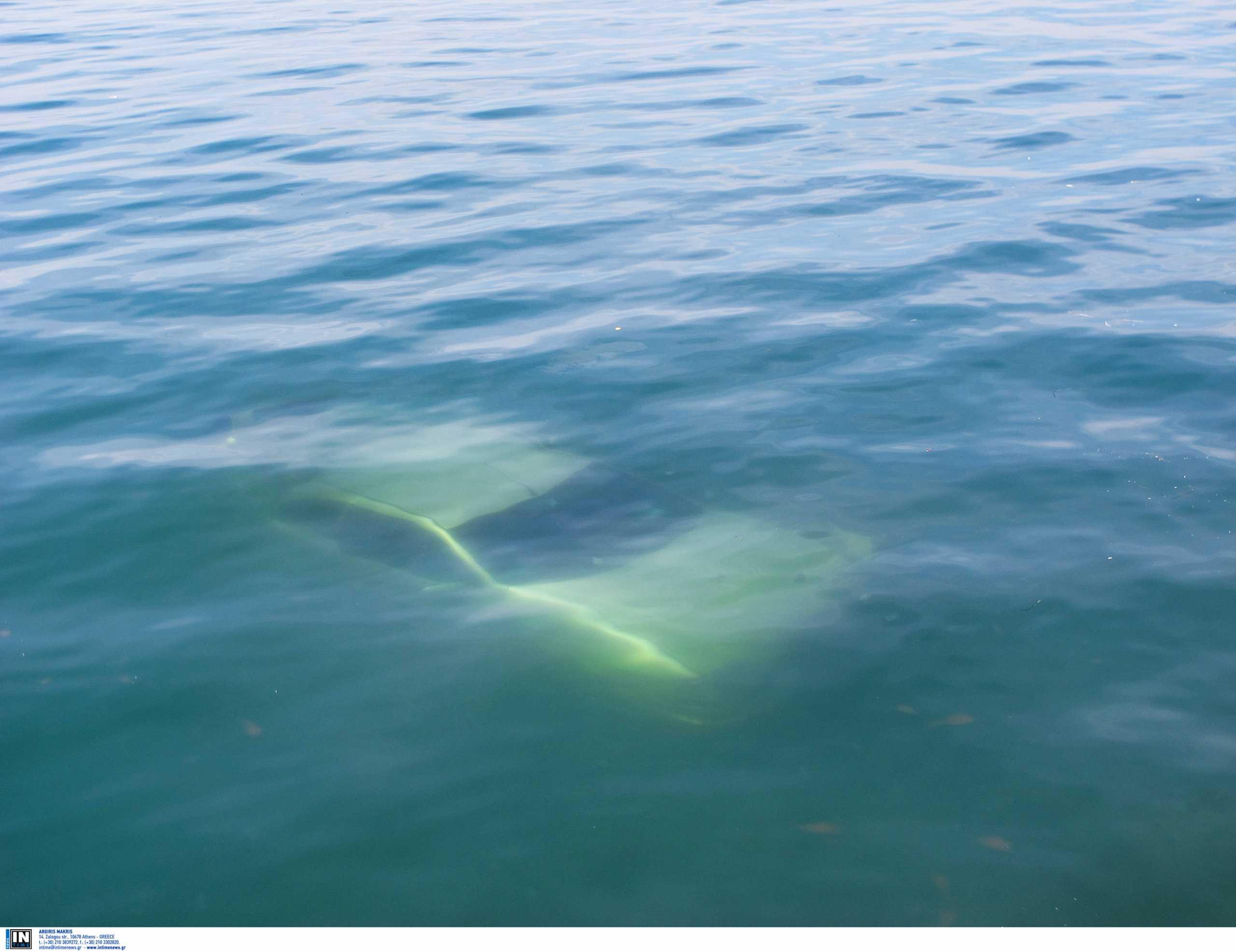 Φωκίδα: Νεκρός οδηγός στο βυθό της θάλασσας – Η μοιραία πτώση του αυτοκινήτου στην Ιτέα
