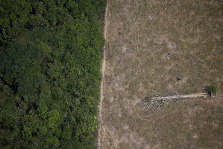 Καταστρέφεται ο Αμαζόνιος! Κόψιμο δέντρων με ρυθμούς – ρεκόρ το 2020 (pics)