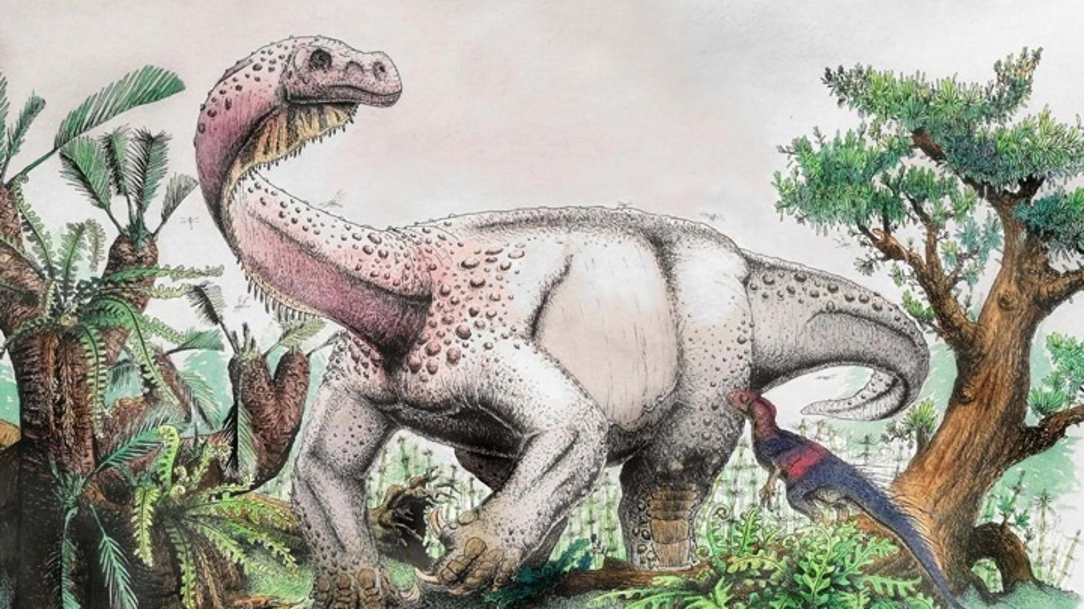 Έρευνα: Κάθε περίπου 27 εκατ. χρόνια συμβαίνουν μαζικές εξαφανίσεις ζώων