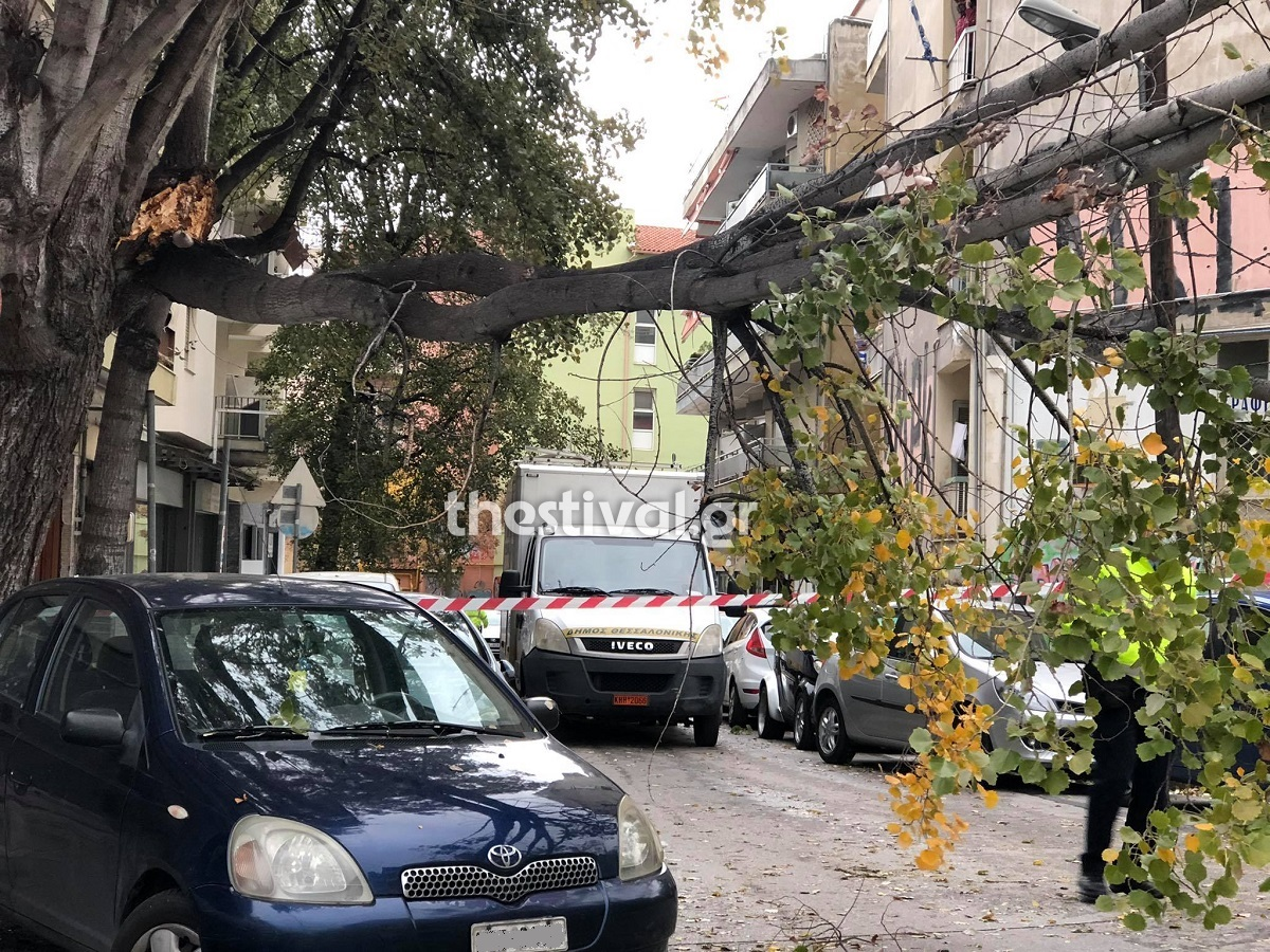 Κακοκαιρία: Πτώσεις δέντρων σε Θεσσαλονίκη και Κατερίνη! Καθυστερήσεις σε δρομολόγια του προαστιακού