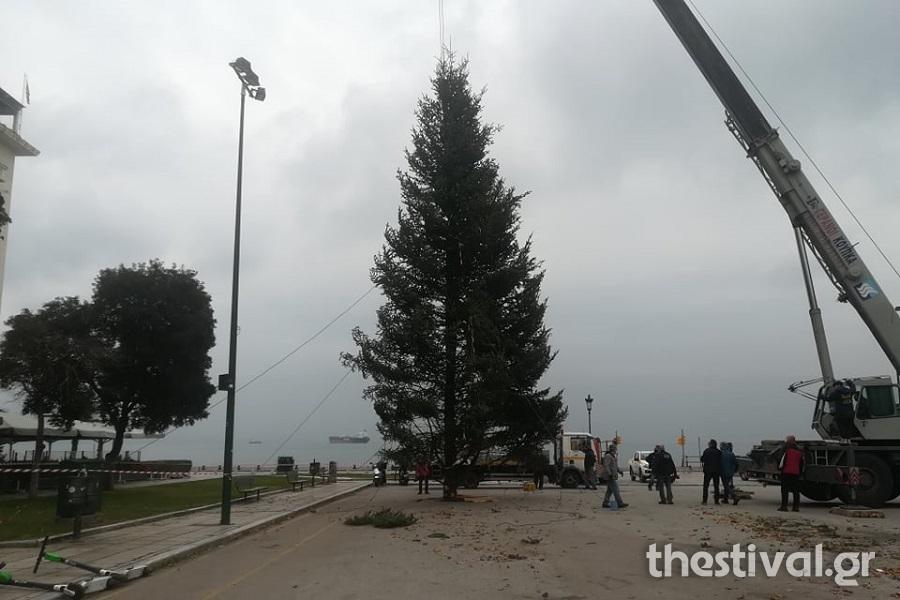 Θεσσαλονίκη: Έτσι στήνεται το χριστουγεννιάτικο δέντρο στην πλατεία Αριστοτέλους! Το σχέδιο για τον στολισμό (Βίντεο)