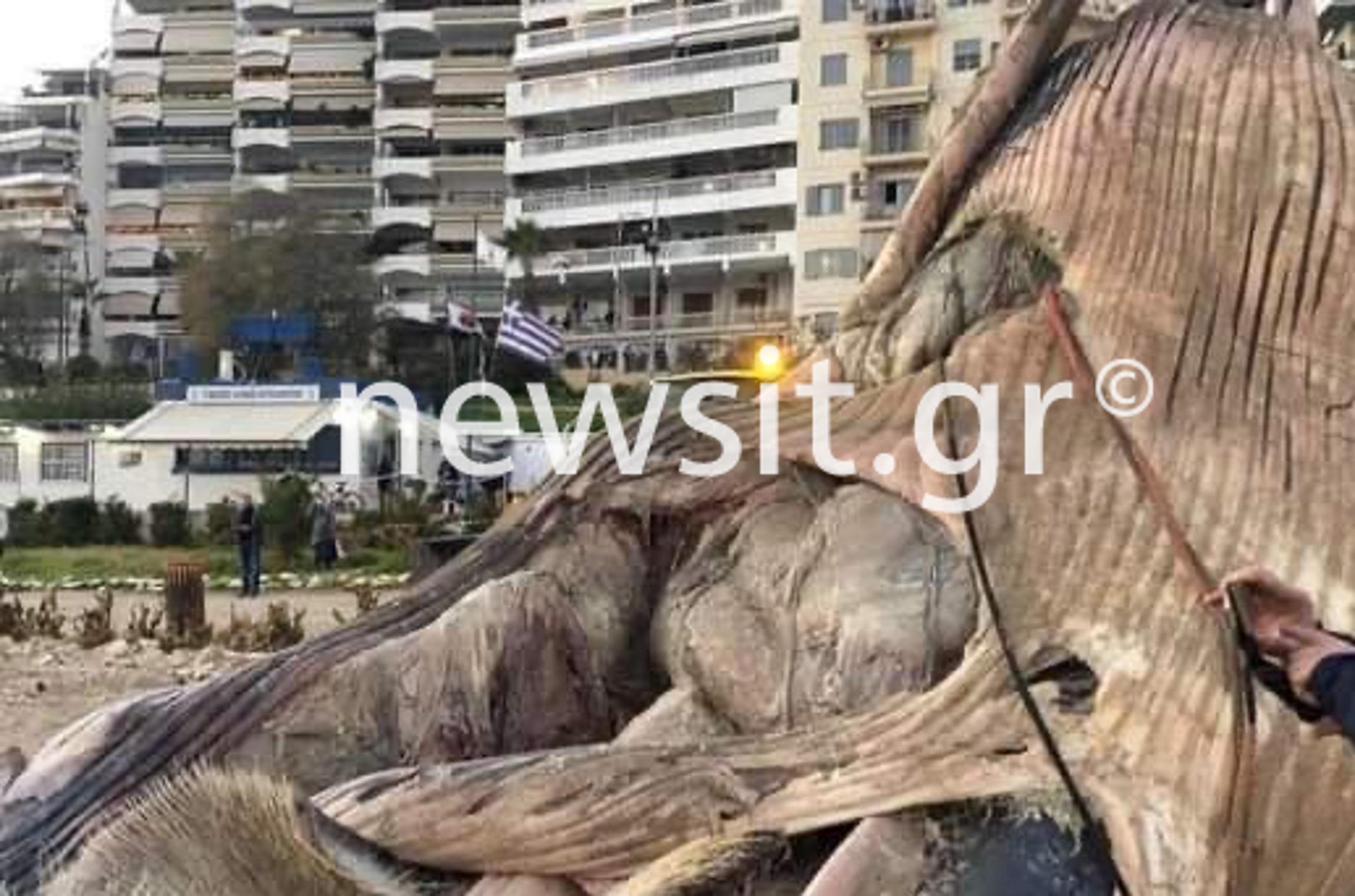 Πώς πέθανε η φάλαινα που ξεβράστηκε στον Πειραιά – Τι αναφέρει το Ινστιτούτο Θαλάσσιας Προστασίας «Αρχιπέλαγος» (pics)