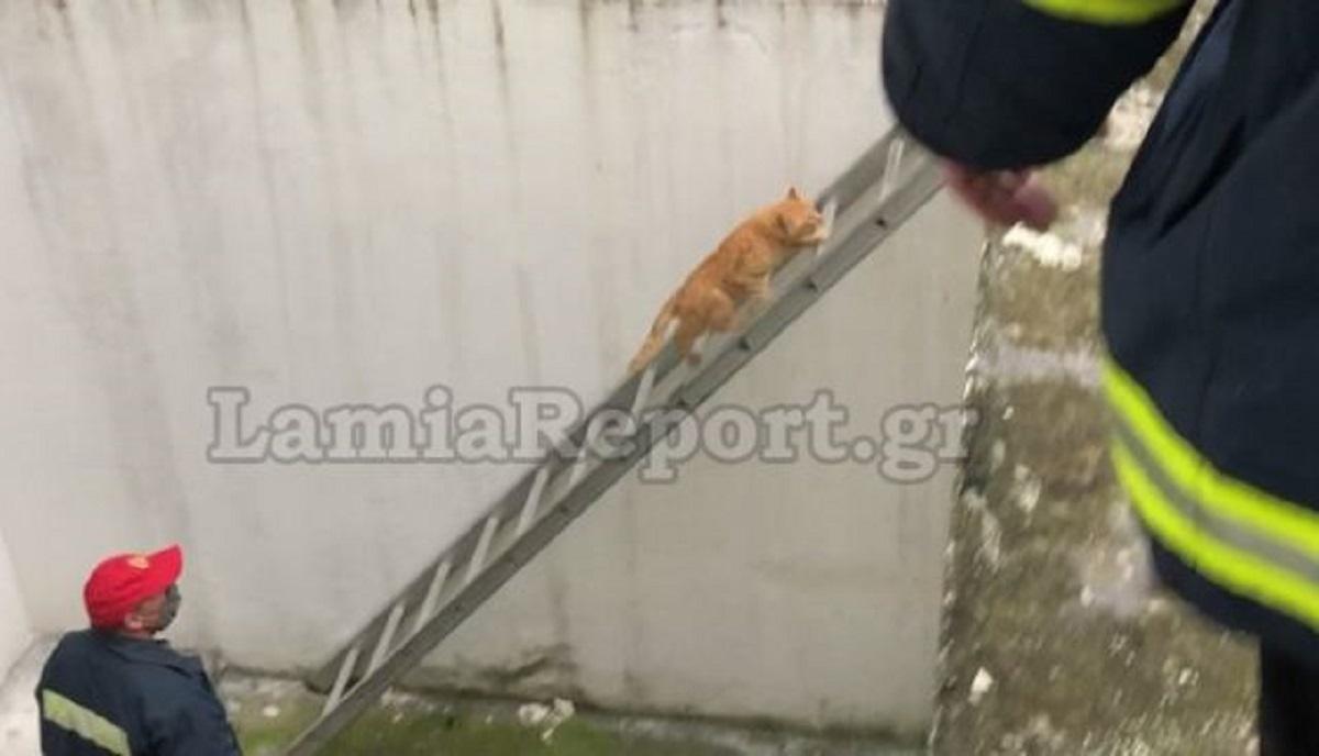 Κύριος ο γάτος: Χρησιμοποίησε μόνος του τη σκάλα των πυροσβεστών και σώθηκε (video)