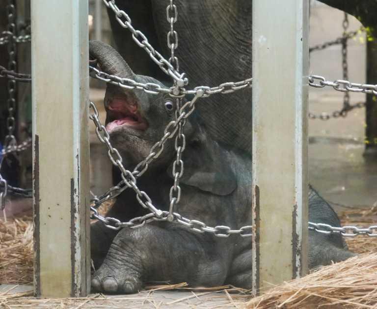 Αυτό είναι το πρώτο ελεφαντάκι που γεννήθηκε ποτέ στον ζωολογικό κήπο του Τόκιο!