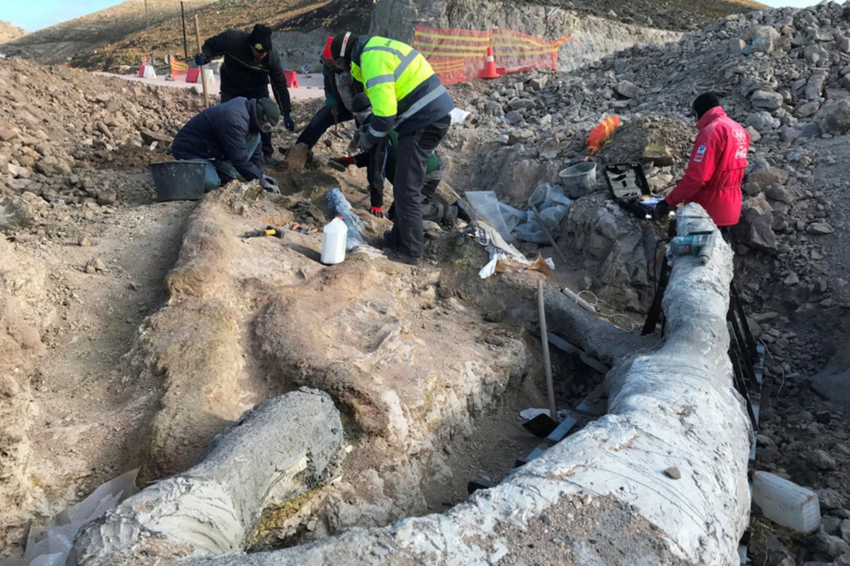 Λέσβος: Εντοπίστηκε εντυπωσιακό απολιθωμένο δέντρο με τα κλαδιά του (pics)