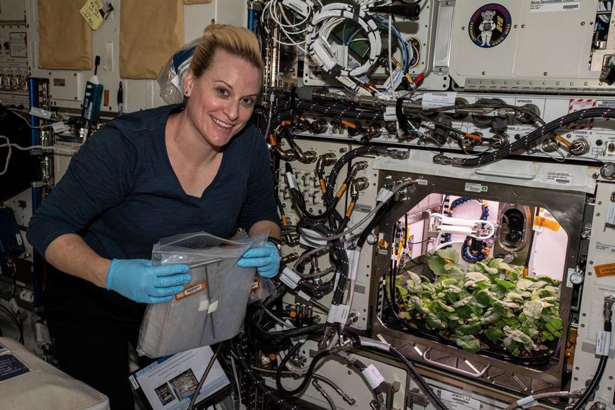 Ραπανάκια διαστήματος! Τα καλλιέργησαν και τα φέρνουν πίσω στη Γη (pics)
