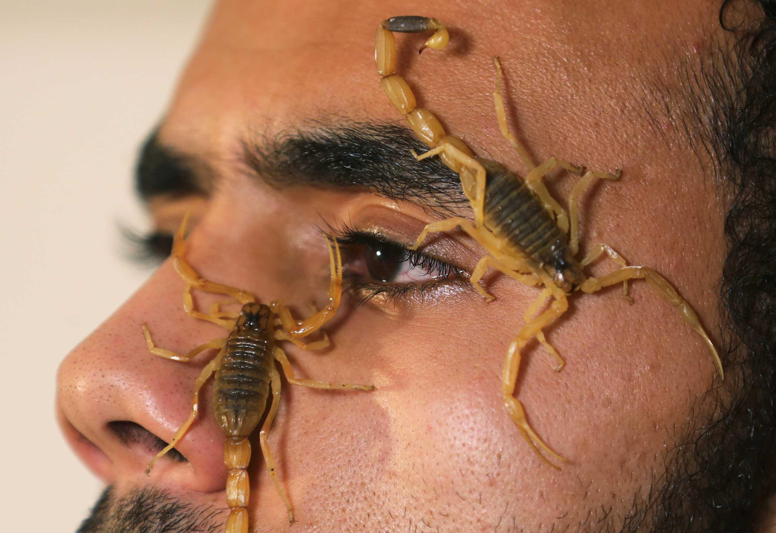 Ο γητευτής των σκορπιών που έγινε πάμπλουτος φτιάχνοντας αντίδοτο στο δηλητήριό τους (pics)