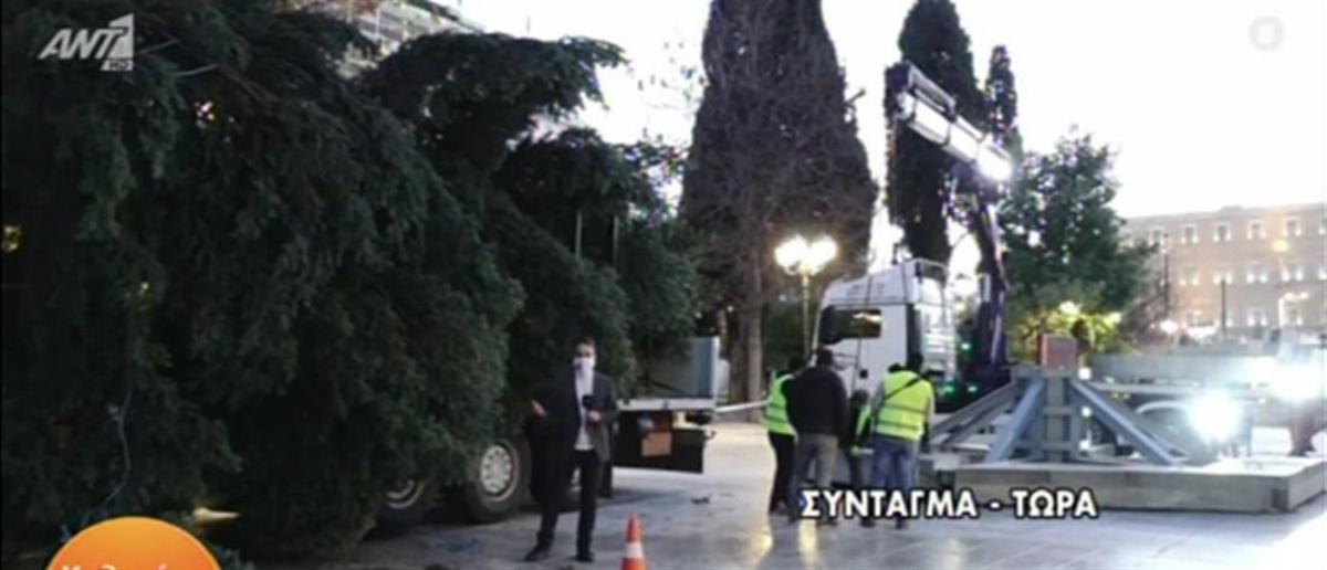 Η Αθήνα φοράει τα γιορτινά της: Στήνεται το χριστουγεννιάτικο δέντρο στο Σύνταγμα (vid)