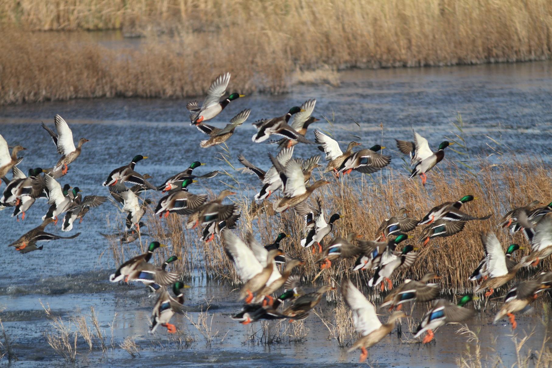 Έβρος: Κυνηγοί βάζουν στο στόχαστρο προστατευόμενα είδη πουλιών – Τι δείχνει μεγάλη έρευνα (pics)