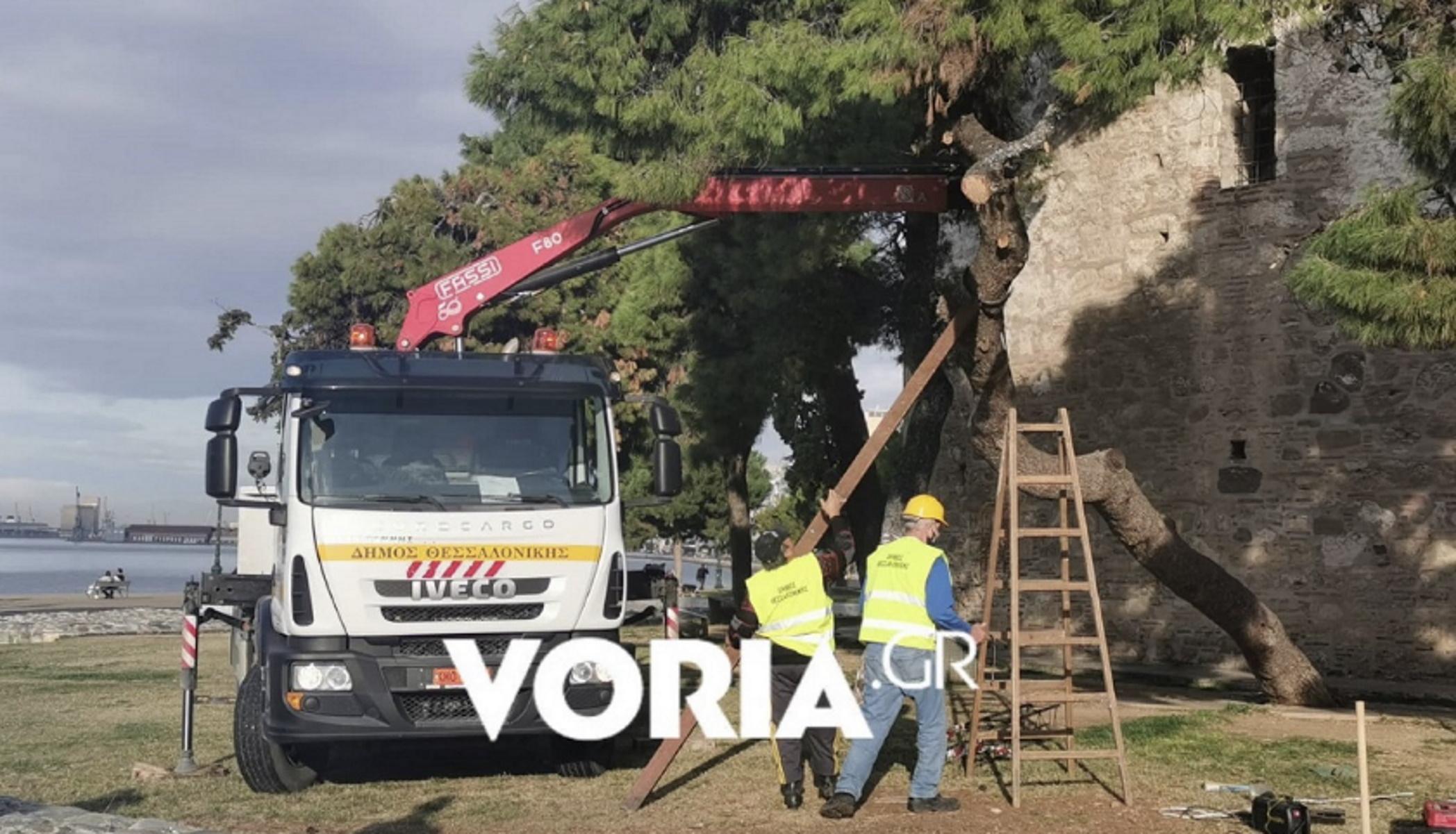 Θεσσαλονίκη: Καρέ καρέ η διάσωση υπεραιωνόβιου πεύκου