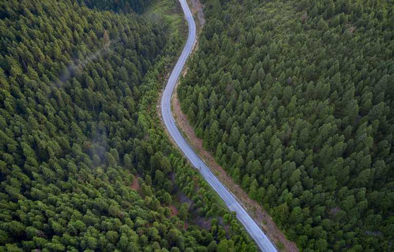 Το δάσος της Ελλάδας που έχει κάτι μοναδικό σε όλο τον κόσμο
