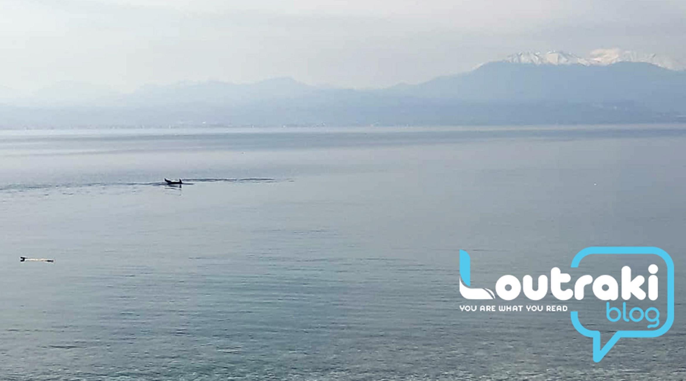 Λουτράκι: Τα δελφίνια βγήκαν στα ρηχά – Τα παιχνίδια τους καθήλωσαν μικρούς και μεγάλους (video)