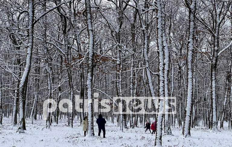 Καιρός: Μαγικές εικόνες από το χιονισμένο δρυοδάσος της Φολόης στην Ηλεία (pics)