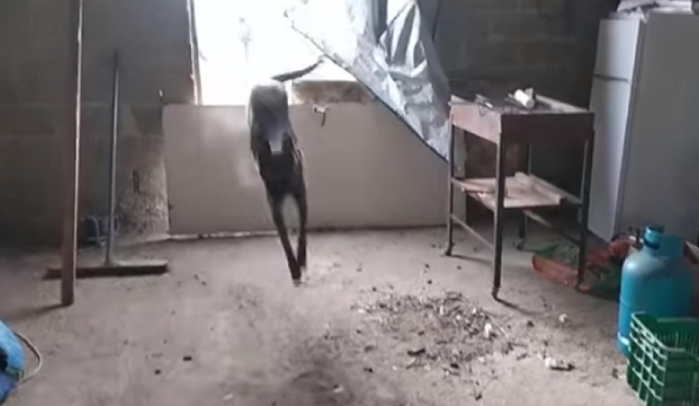 Κιλκίς: Ο αστυνομικός σκύλος εν δράσει μέσα σε αποθήκη – Δείτε το βίντεο των 67 δευτερολέπτων