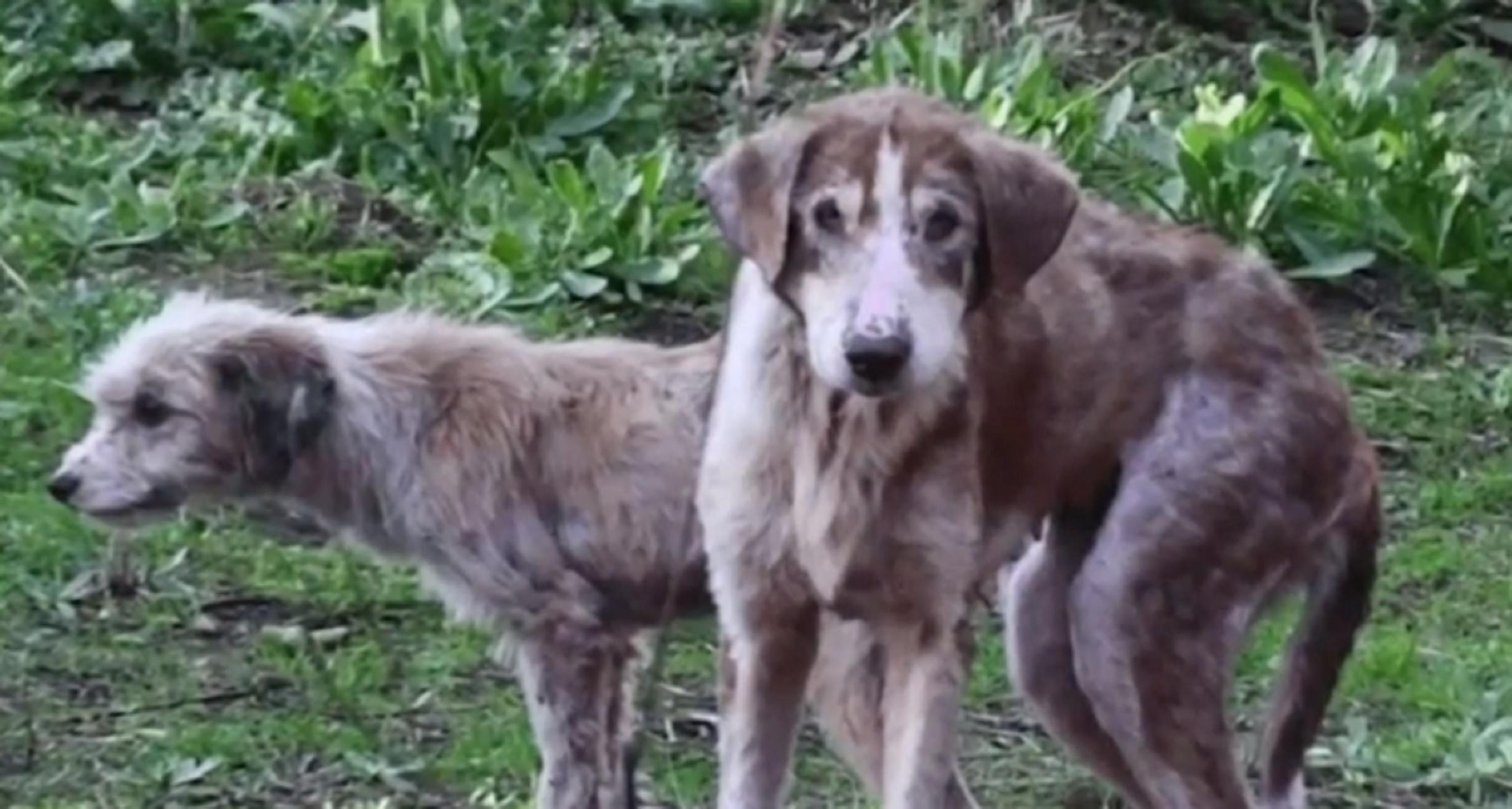 Βόλος: Ανατριχίλα από τις εικόνες 20 βασανισμένων σκύλων – Η άγνωστη αλήθεια πίσω από τα πλάνα (video)