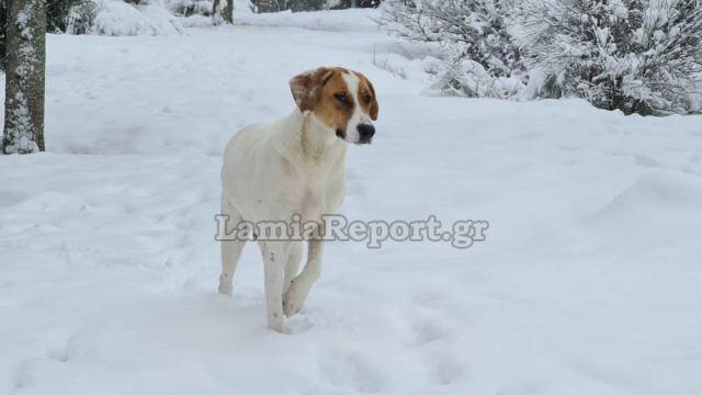 Καιρός – Φθιώτιδα: Η σκυλίτσα που χάρηκε το χιόνι με την ψυχή της και έκλεψε την παράσταση (video)