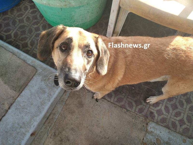 Χανιά: Συγκινεί ο σκύλος που ψάχνει το νεκρό αφεντικό του – Οι επίμαχες σκηνές μετά τη βύθιση του ιστιοφόρου (video)