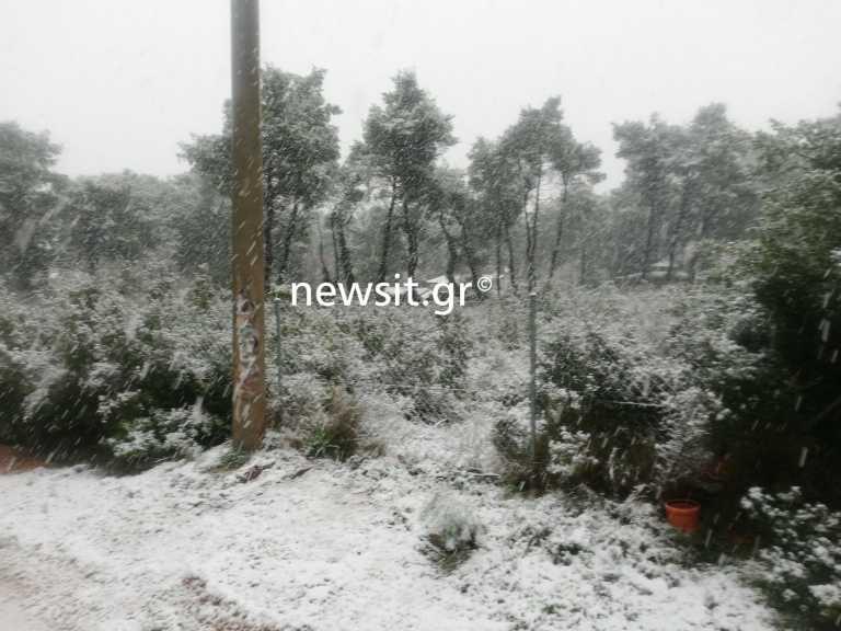 Καιρός – Αττική: Ο «Λέανδρος» σαρώνει με χιόνια τα Βόρεια Προάστια (pics)