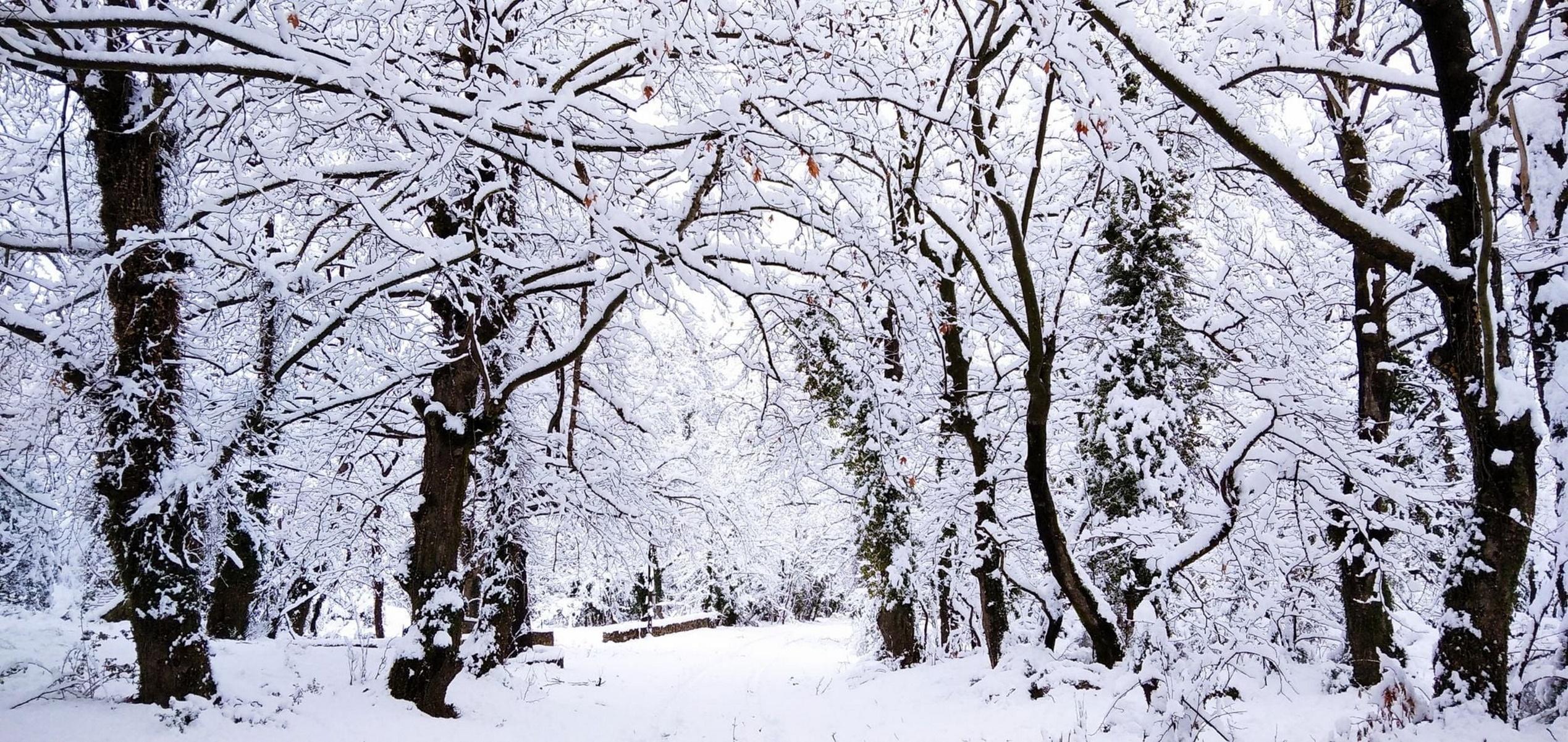 Καιρός – Meteo: Βουτιά της θερμοκρασίας με βροχές και χιόνια – Δεν αποκλείεται να χιονίσει και στην Αττική