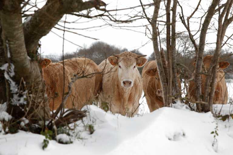Τον έψαχναν 24 χρόνια για την κλοπή 2 αγελάδων και τον βρήκαν στην Κατερίνη