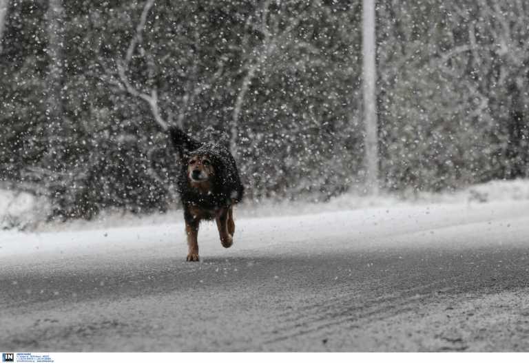 Βαρύ χιονιά και πτώση θερμοκρασίας έως 18 βαθμούς φέρνει η «Μήδεια» - Έκτακτο δελτίο από την ΕΜΥ