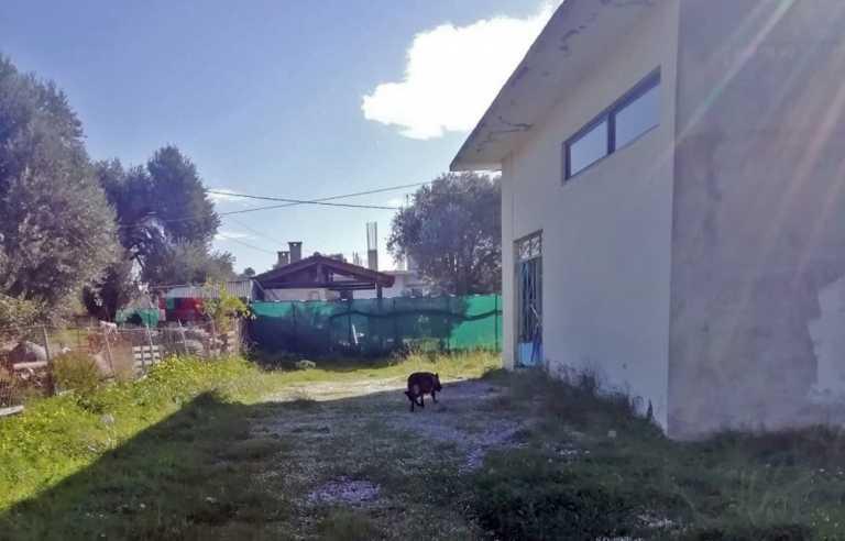Κρήτη: Φρίκη στο Τυμπάκι – Δηλητηρίασαν με φόλες δεκάδες σκυλιά