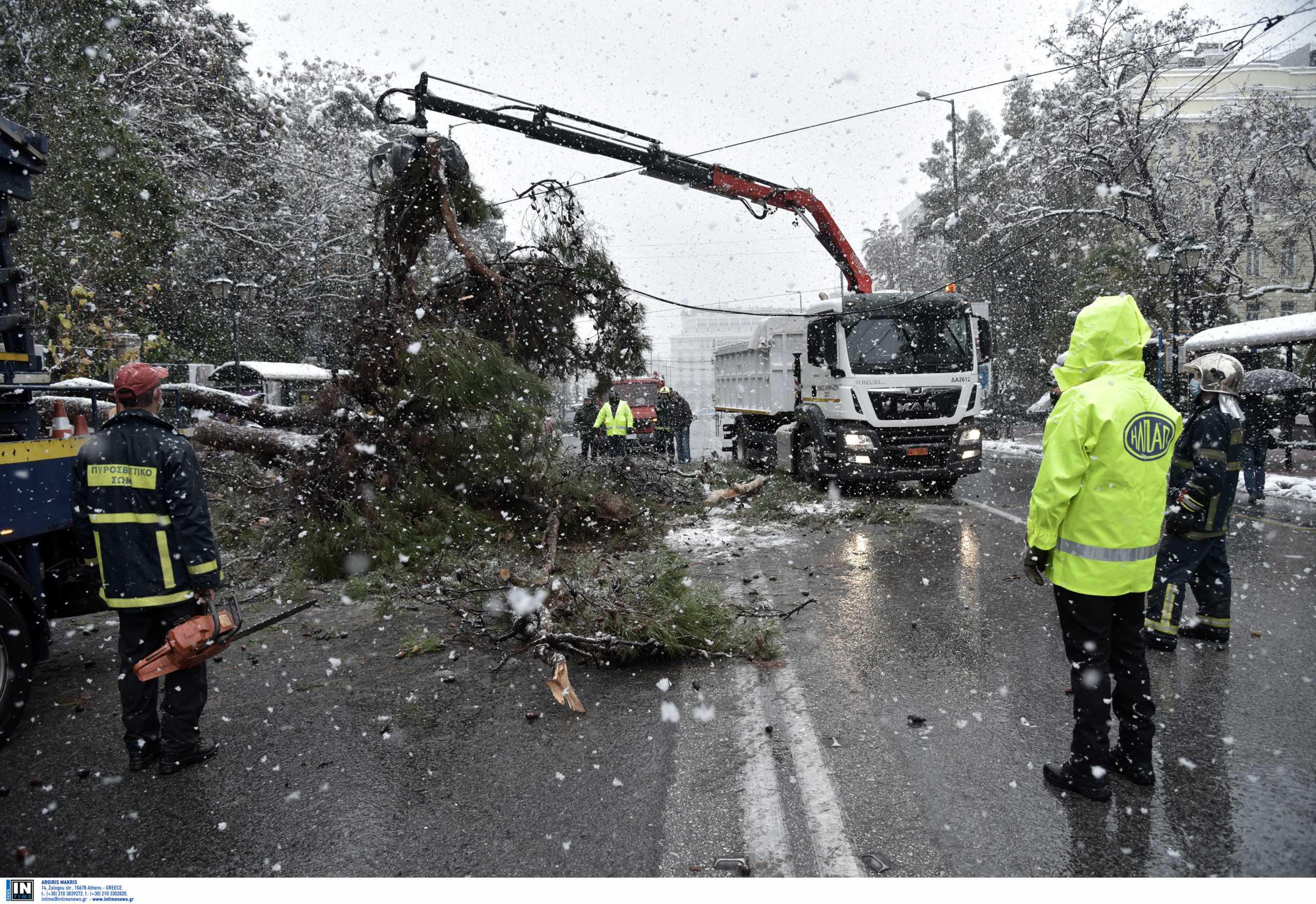 Καιρός – Κακοκαιρία Μήδεια: Κανονικά η κυκλοφορία στη Βασιλίσσης Σοφίας μετά την πτώση δέντρου (pics)
